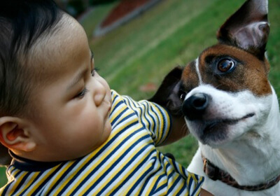 Pets and Kids at Work